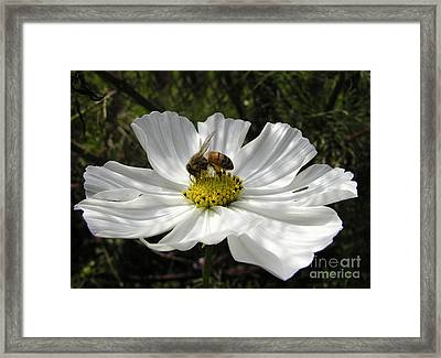 f21 Framed Print by Tom Griffithe