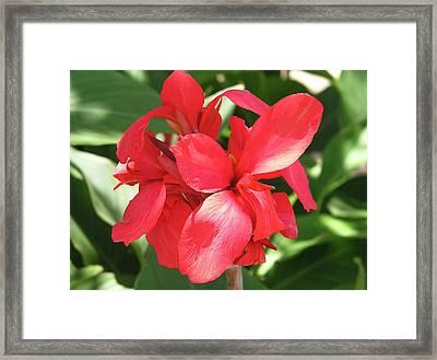 F22 Cannas Flower Framed Print by Donald k Hall