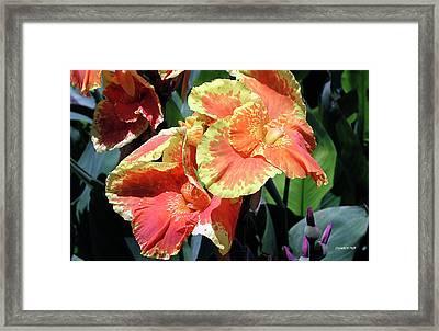 F24 Cannas Flower Framed Print by Donald k Hall