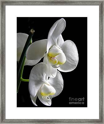 f33 Framed Print by Tom Griffithe