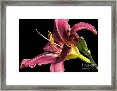 f36 Framed Print