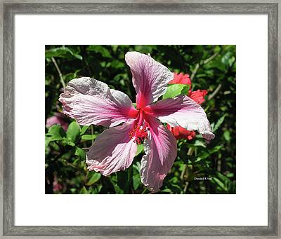 F5 Hibiscus Flower Hawaii Framed Print by Donald k Hall