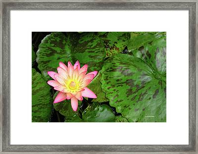 F6 Water Lily Framed Print by Donald k Hall