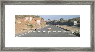 Fab 4 On Zebra Crossing Framed Print