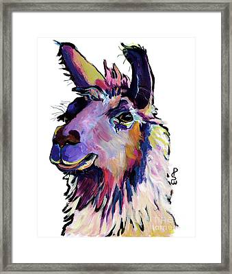 Fabio Framed Print by Pat Saunders-White