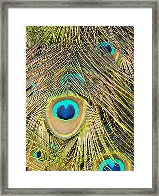 Framed Print featuring the photograph Fabulous Feathers by Margaret Bobb
