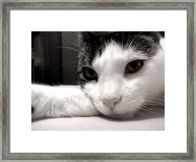 Fabulous Feline Framed Print