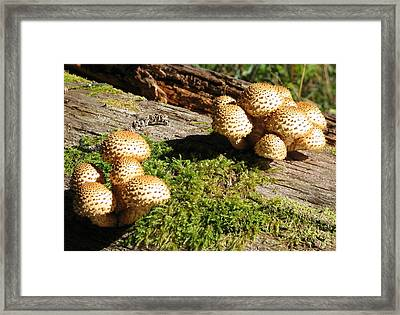Fabulus Fungi Framed Print
