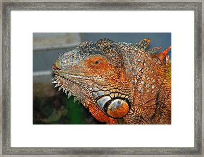 Face A Mother Can Love Framed Print by Teresa Blanton