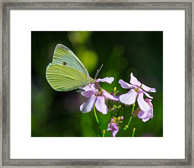 Face First Framed Print by Robert Pearson