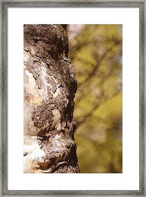 Face In The Tree Framed Print