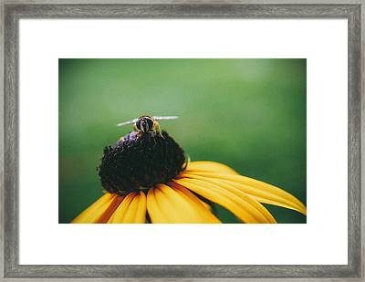 Face Of A Bee Framed Print by Tracy  Jade