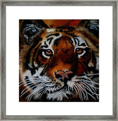Face Of A Tiger Framed Print