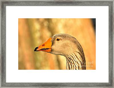 Face Of A Toulouse Goose Framed Print