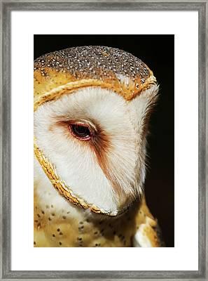 Face Of Athena Framed Print