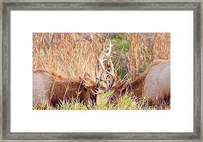 Framed Print featuring the photograph Face Off by Todd Kreuter