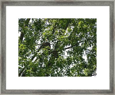 Face The Eagle Framed Print by Donald C Morgan