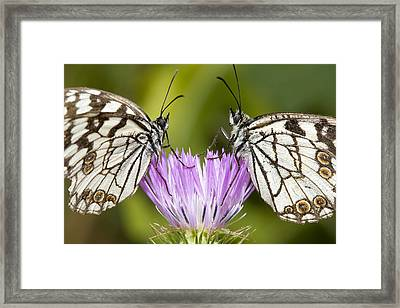 Face To Face Framed Print by Andre Goncalves