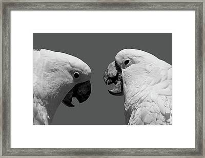 Framed Print featuring the photograph Face To Face Iv Bw by David Gordon