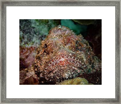 Face To Face Framed Print by Jean Noren