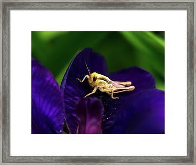 Face To Face With Grasshopper Framed Print by Douglas Barnett