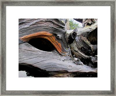 Driftwood Unicorn Framed Print