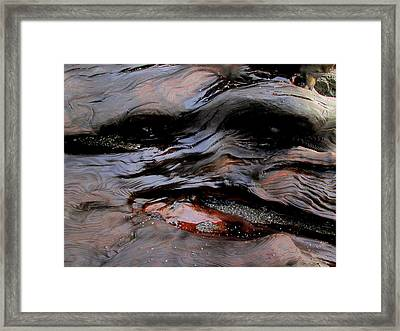 Faces In The Wood #4 Framed Print