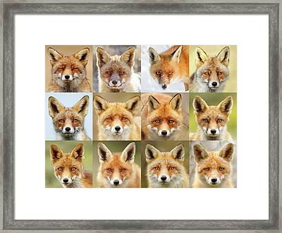 Faces Of Foxes Framed Print by Roeselien Raimond