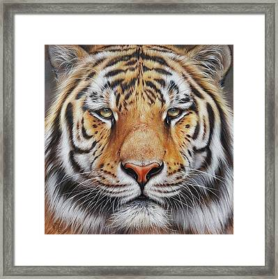 Faces Of The Wild - Amur Tiger Framed Print by Elena Kolotusha