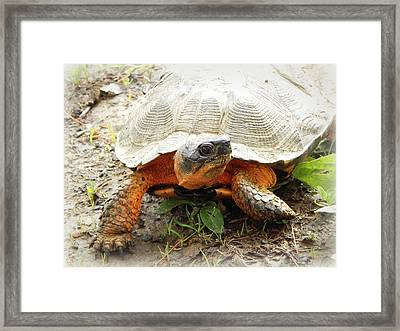 Facing Extinction Framed Print by Karen Cook