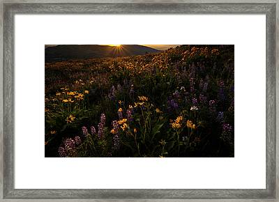 Framed Print featuring the photograph Facing The Day by Mike Lang