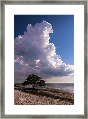 Facing The Storm Framed Print