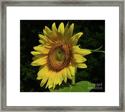 Hand Made By God Framed Print