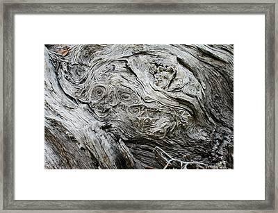 Facing Whorlywood Framed Print by Lynda Dawson-Youngclaus