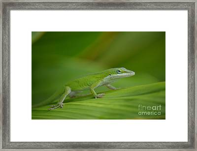 Fade Into The Green Framed Print by Kathy Gibbons