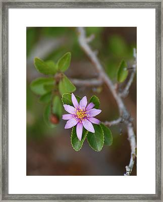 Fadeaway Framed Print by Jean Booth