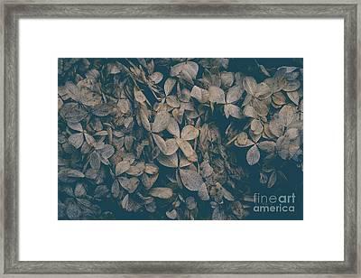Faded Flowers Framed Print by Edward Fielding