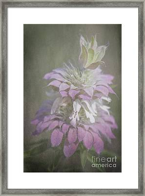 Faded Purple Framed Print by Lisa Holmgreen