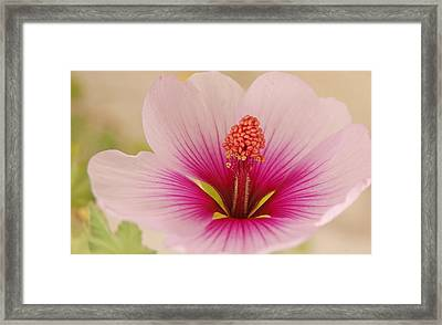 Fadeout Framed Print by Jean Booth
