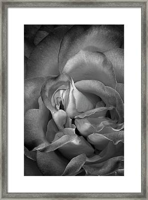 Framed Print featuring the photograph Fading Beauty by Mike Lang