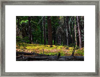 Cascade Mountain Range Fading Ferns Framed Print