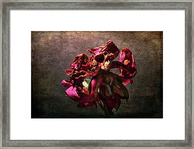 Framed Print featuring the photograph Fading Glory by Randi Grace Nilsberg