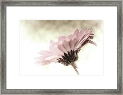 Fading Inspiration Framed Print