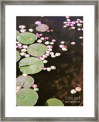 Fading Lily Pads Framed Print