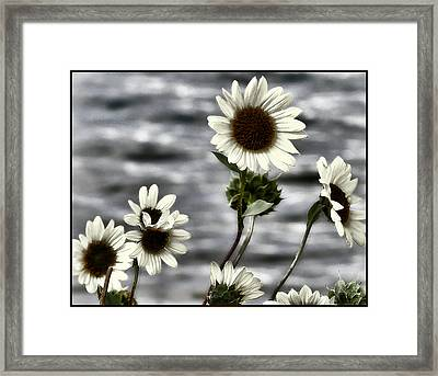 Framed Print featuring the photograph Fading Sunflowers by Susan Kinney