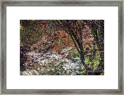Faerie Glen Framed Print by Kate Brown