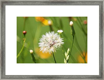 Fairest Of Them All Framed Print by Lori Mellen-Pagliaro