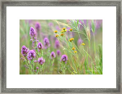 Fairing Of Spring Framed Print