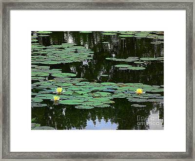 Fairmount Park Lily Pond Framed Print