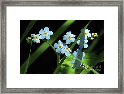 Fairy Blue Framed Print by Georgia Sheron